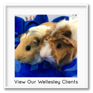 guinea pigs framed photo