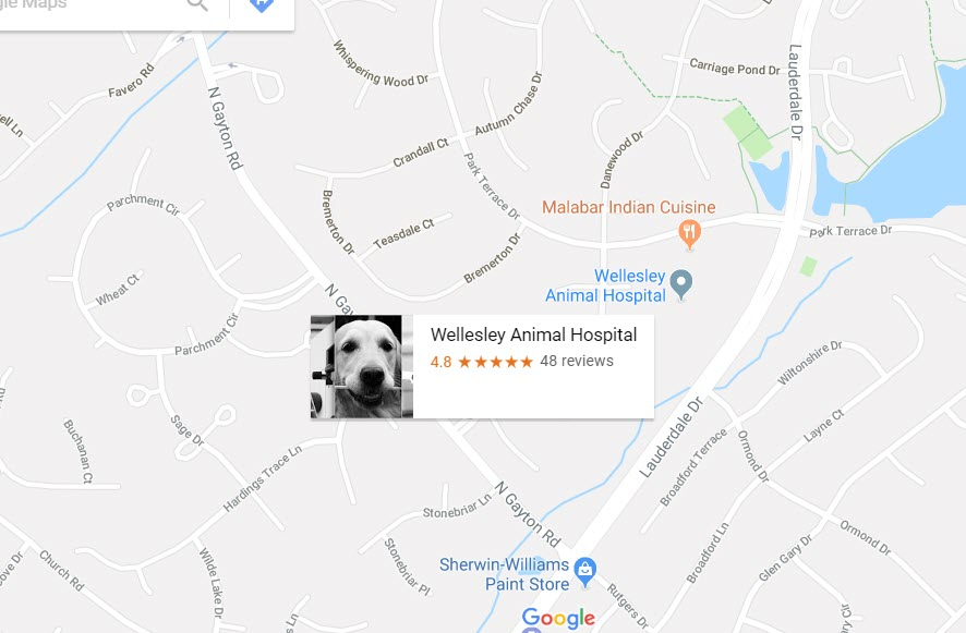 Wellesley Animal Hospital located in Richmond VA